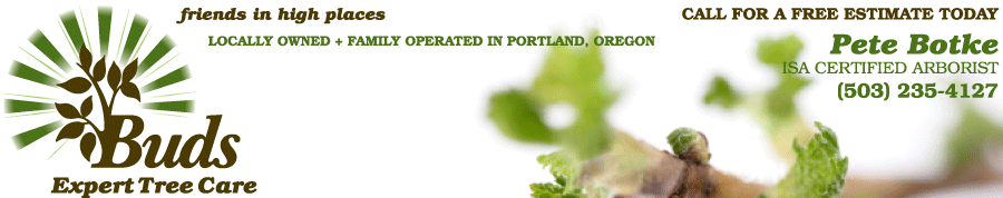 Buds Expert Tree Care: Arborist Services in Portland, Oregon